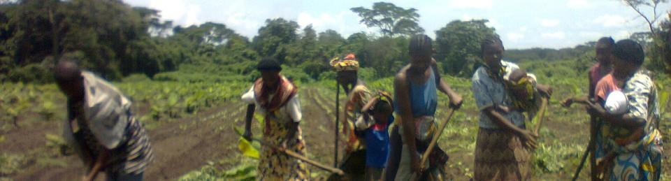 Sud-Ouest Développement